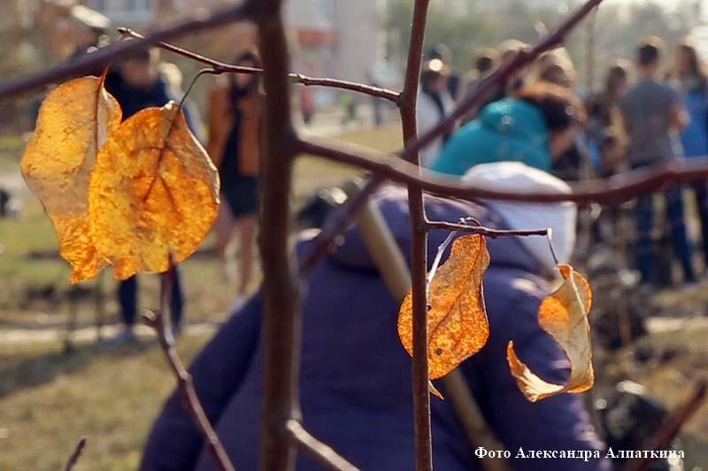 Яблоневый сад появится в Заозёрном