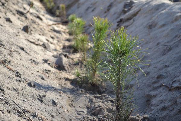 Под Курганом высадят лес в виде надписи «75 лет Победы»