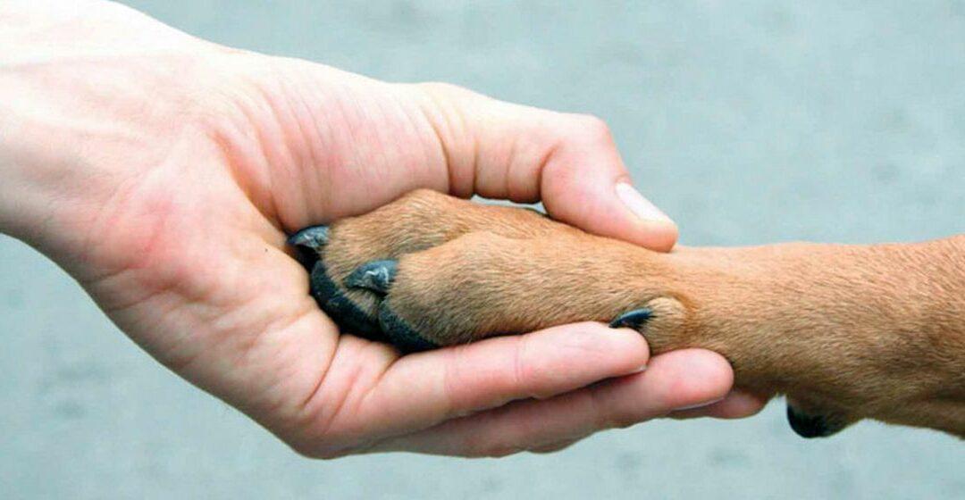 Зауральцев призывают помочь бездомным животным